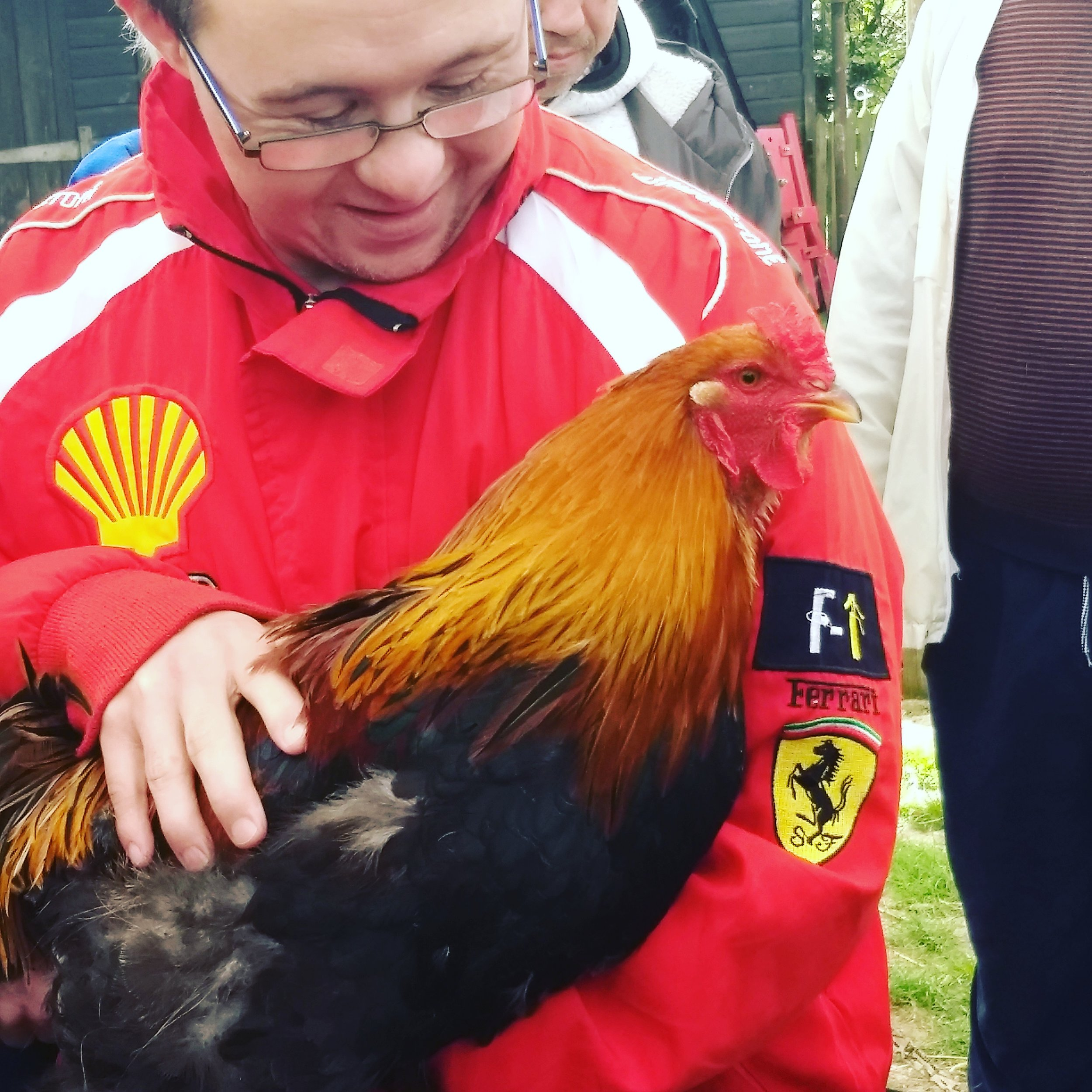 A cuddle with the cockerel