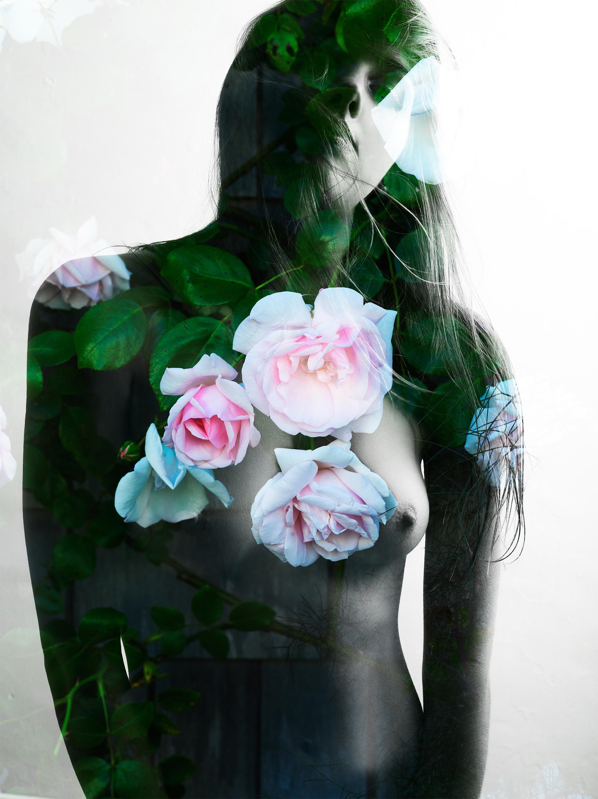 Sconset Rose