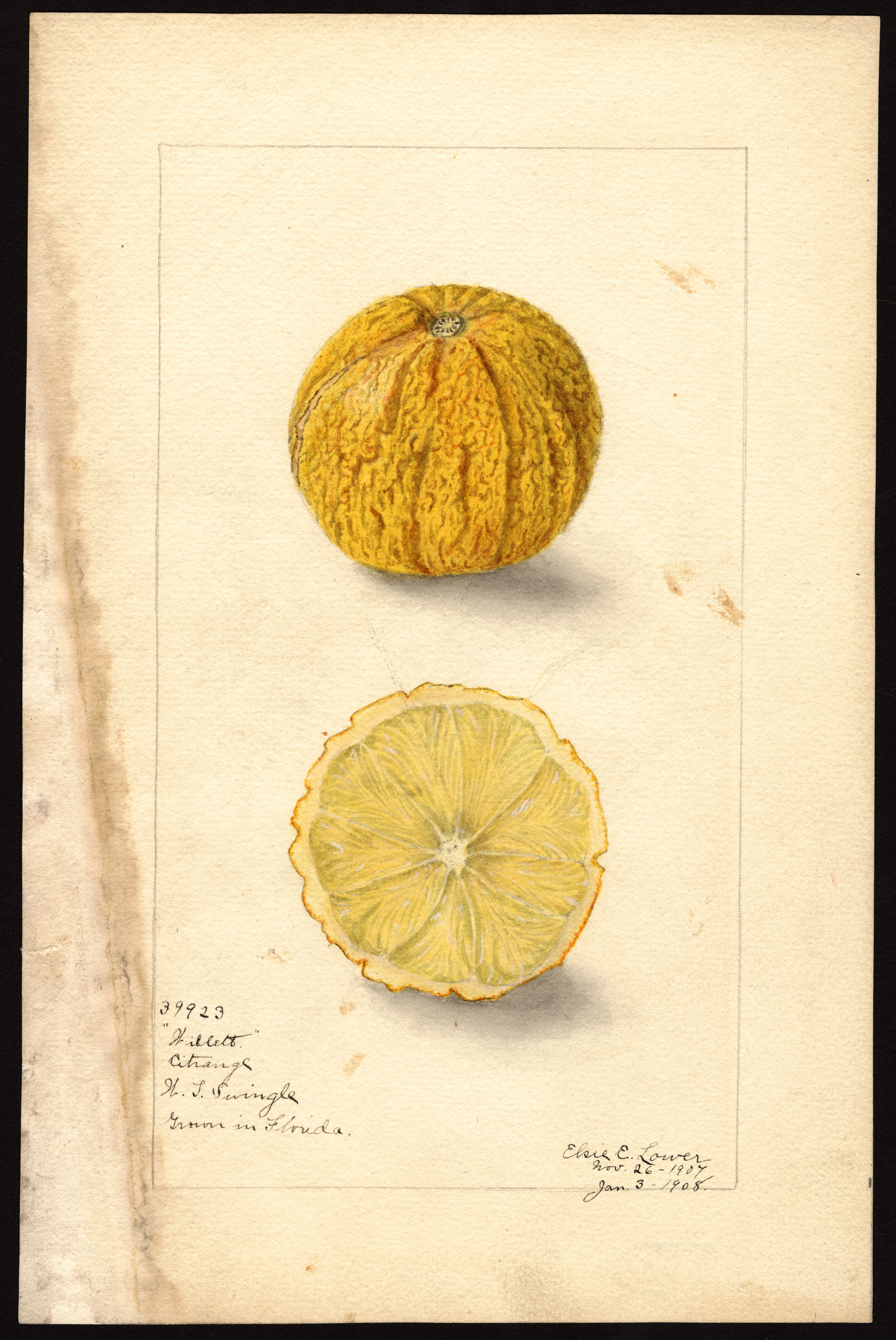 The Varieties of the Citrus Experience -