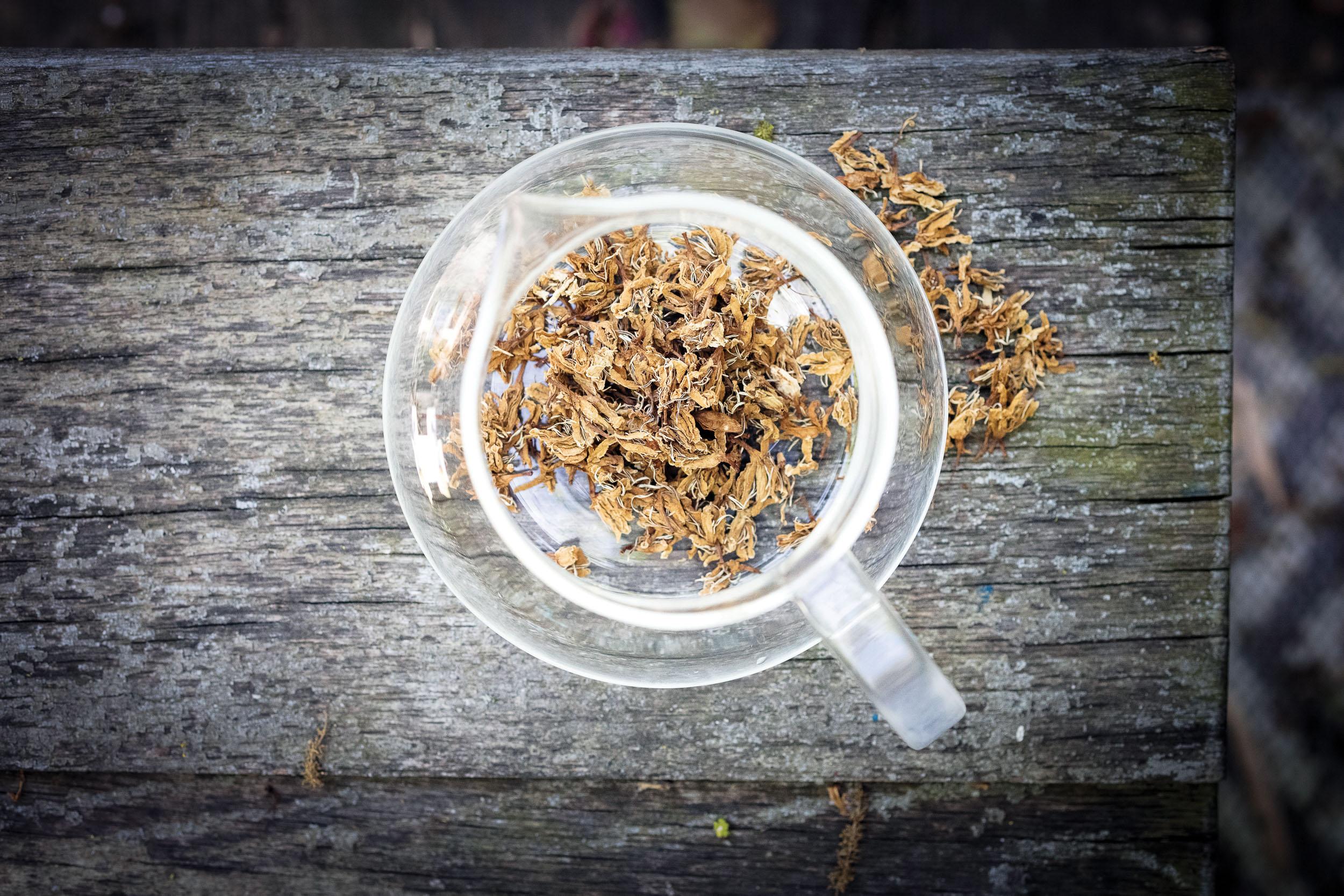 Flor de Cafe, or coffee blossoms to steep as tea