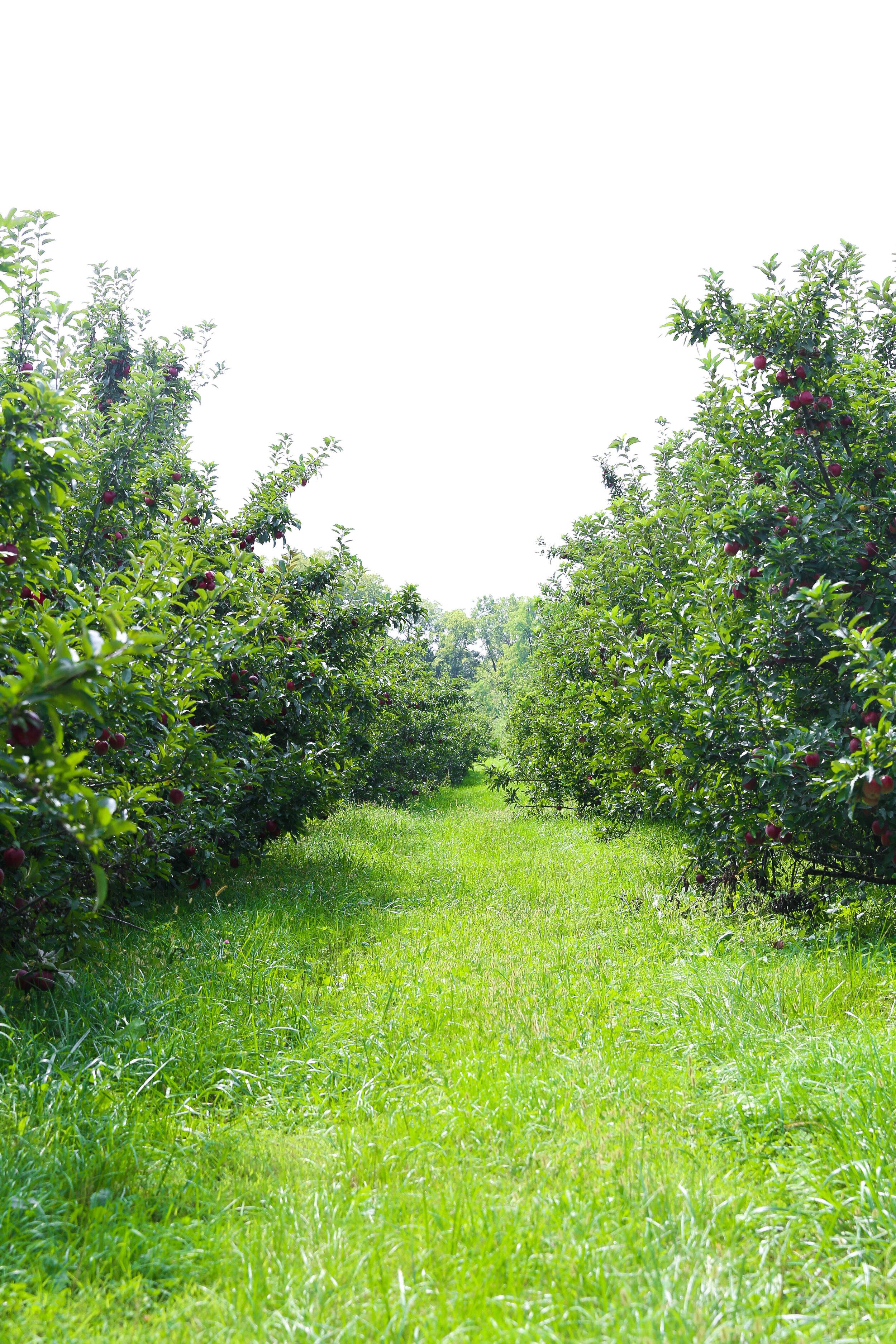 Wesler Farm (10).jpg
