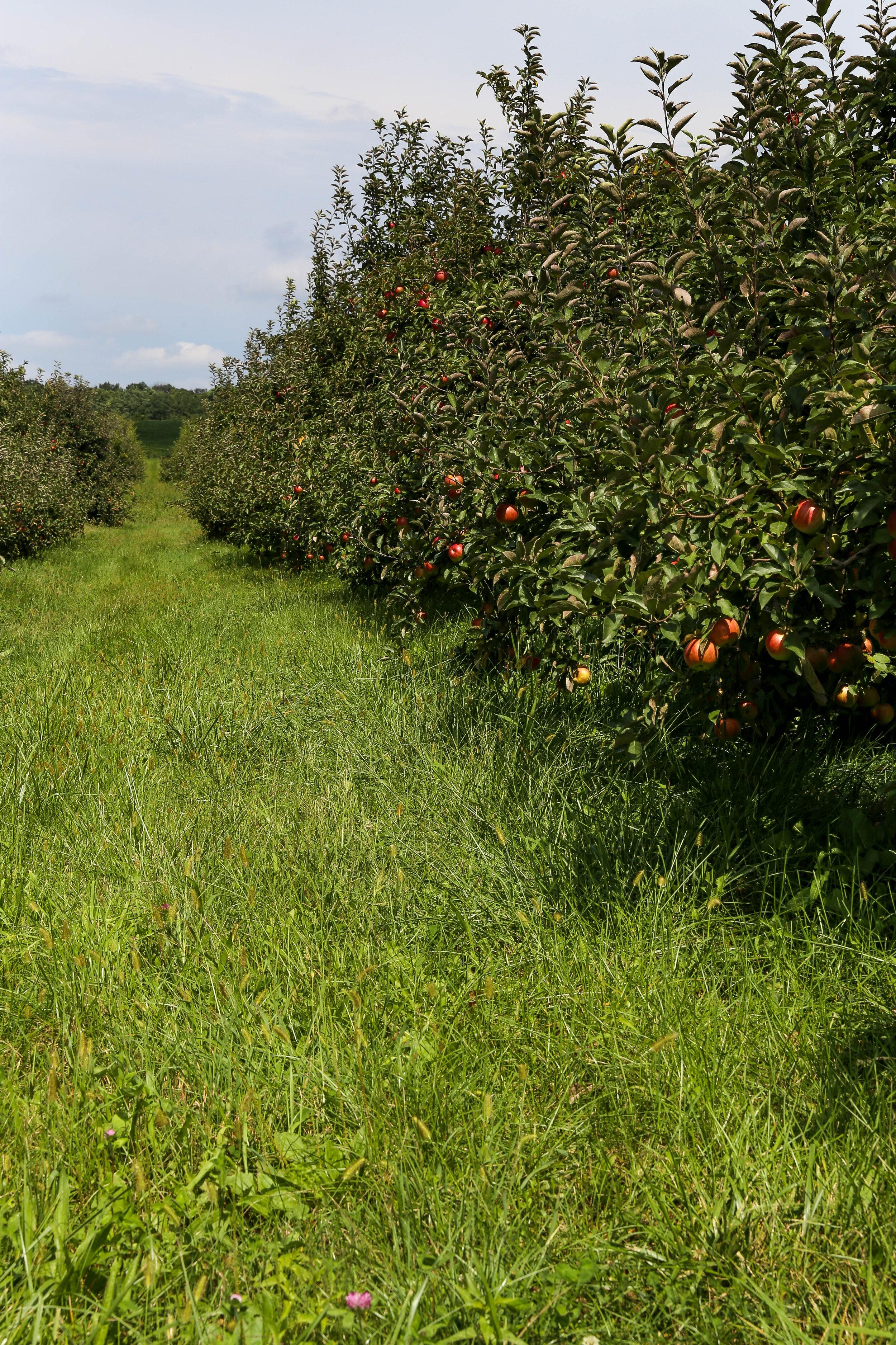 Wesler Farm (26).jpg