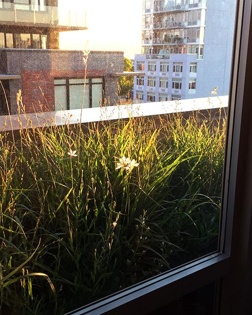 urban rooftop plantings