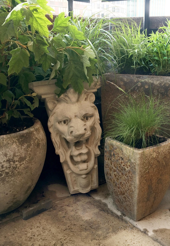 lion grasses new.jpg