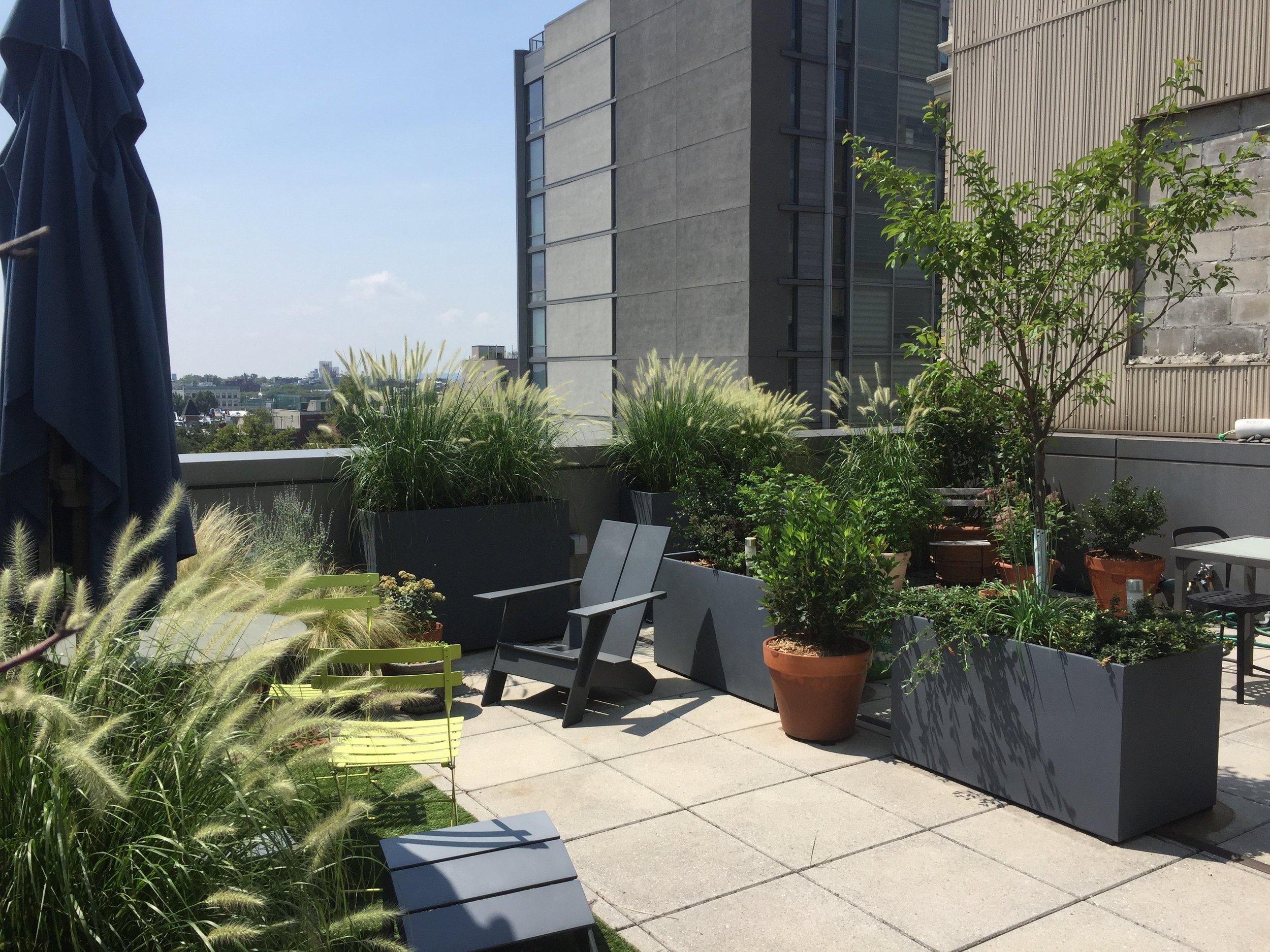 Brooklyn Rooftop Garden