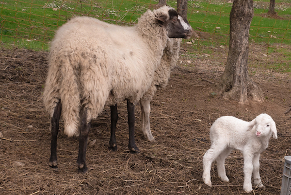 """This baby was very vocal and kept yelling, """"Ma"""" which was slightly obnoxious and very cute."""