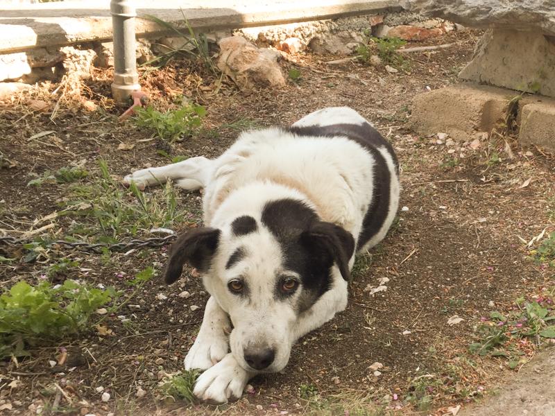 4.20.18. Cute stray pup