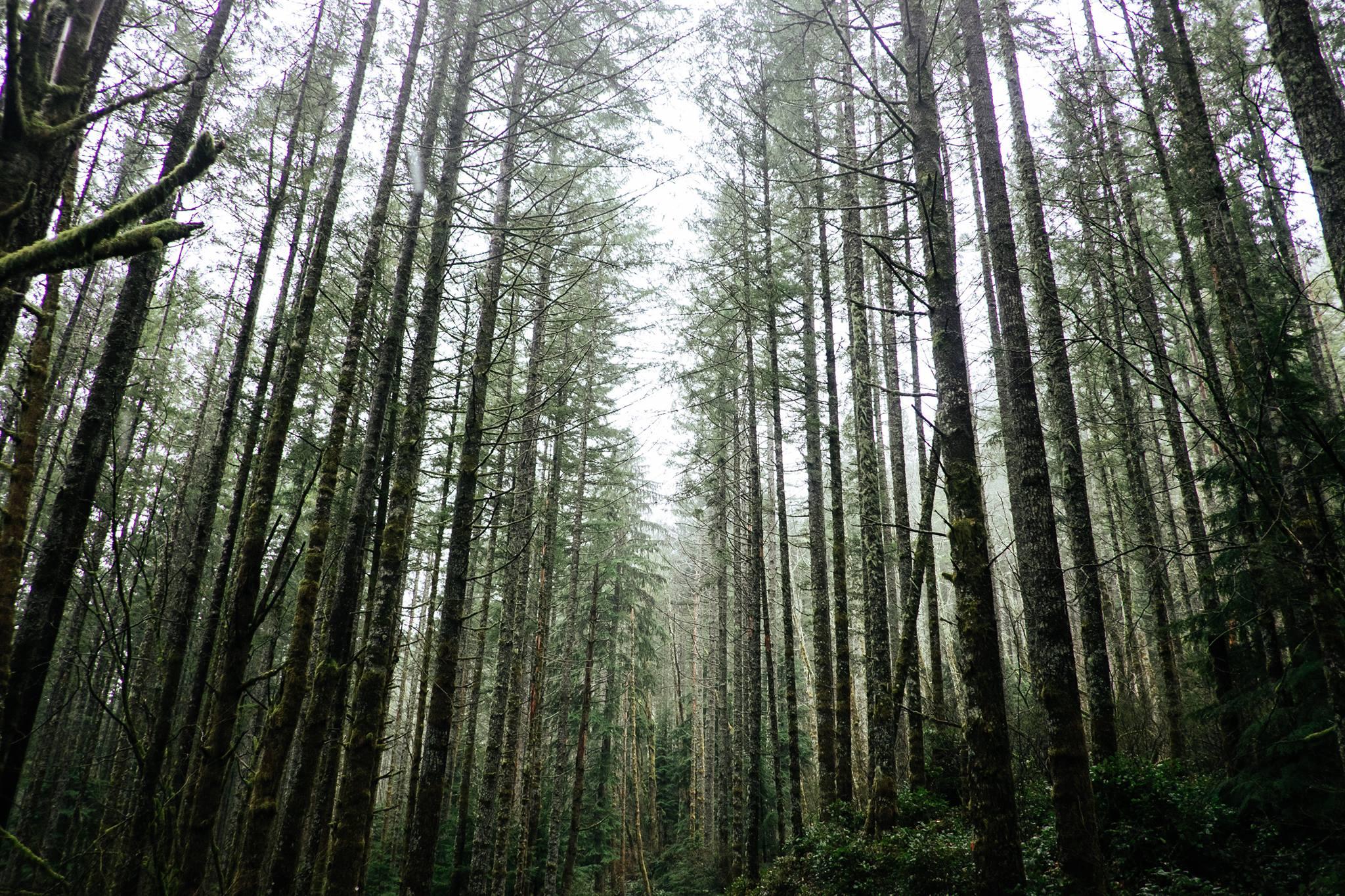 Case Study: Washington Environmental Council