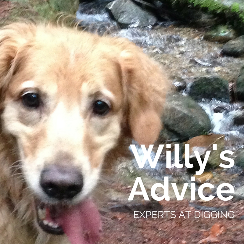 Willy's Advice