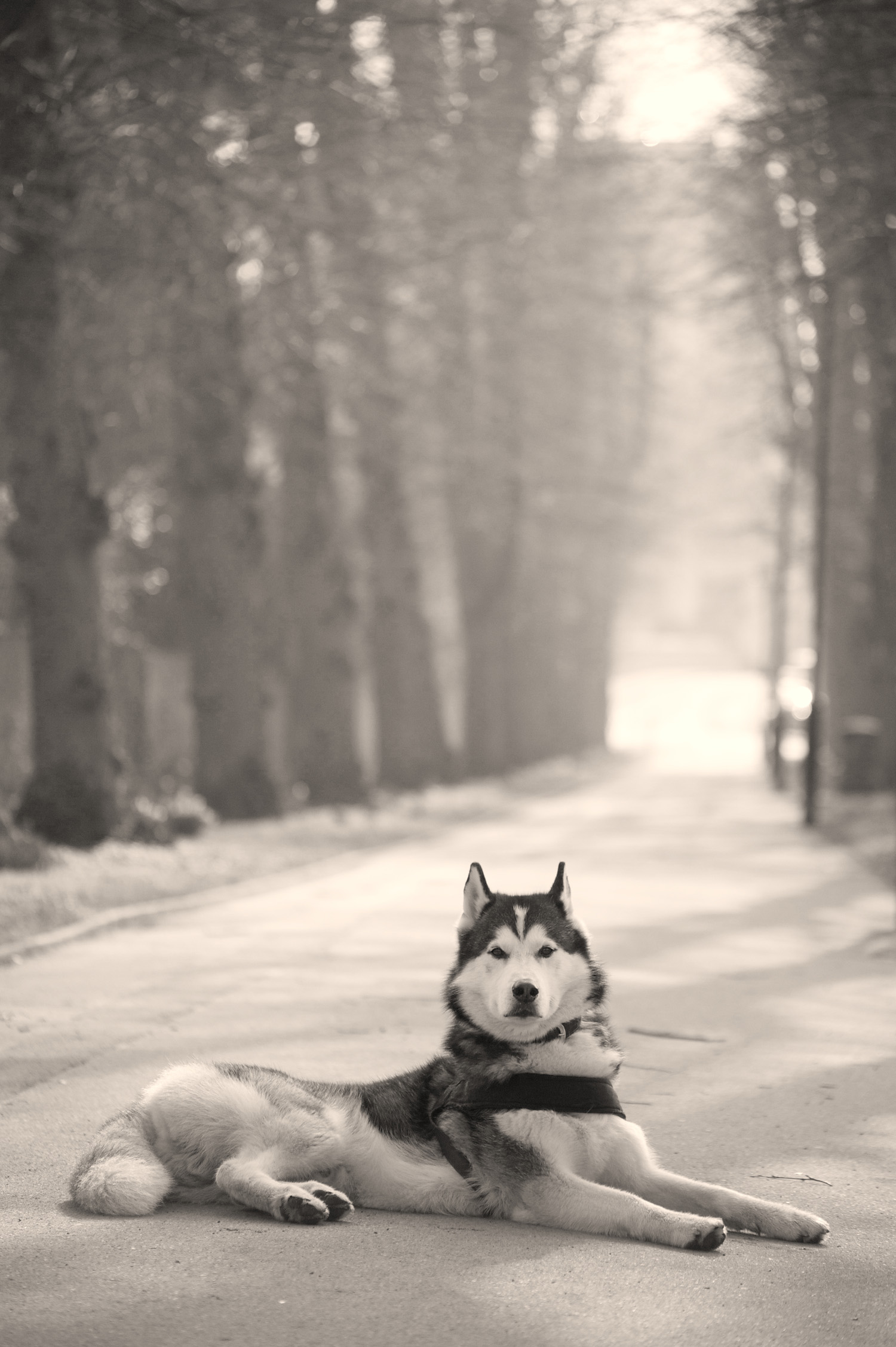 animal1601.jpg