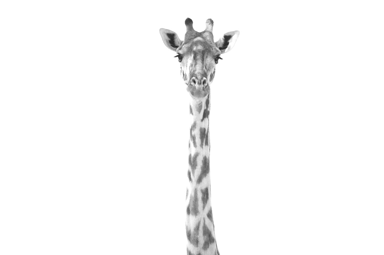 travel-2016-giraffe-photo.jpg