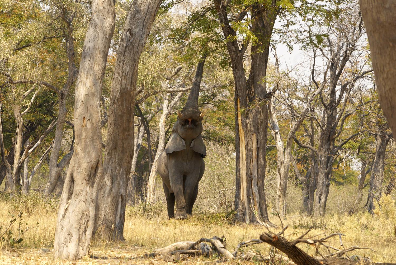 travel-2016-elephant-eli-photo.jpg