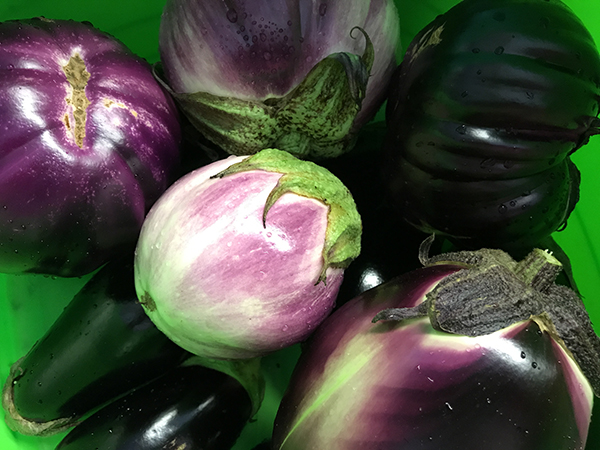 FARMERS MARKET OF HILTON HEAD - CLICK TO READ