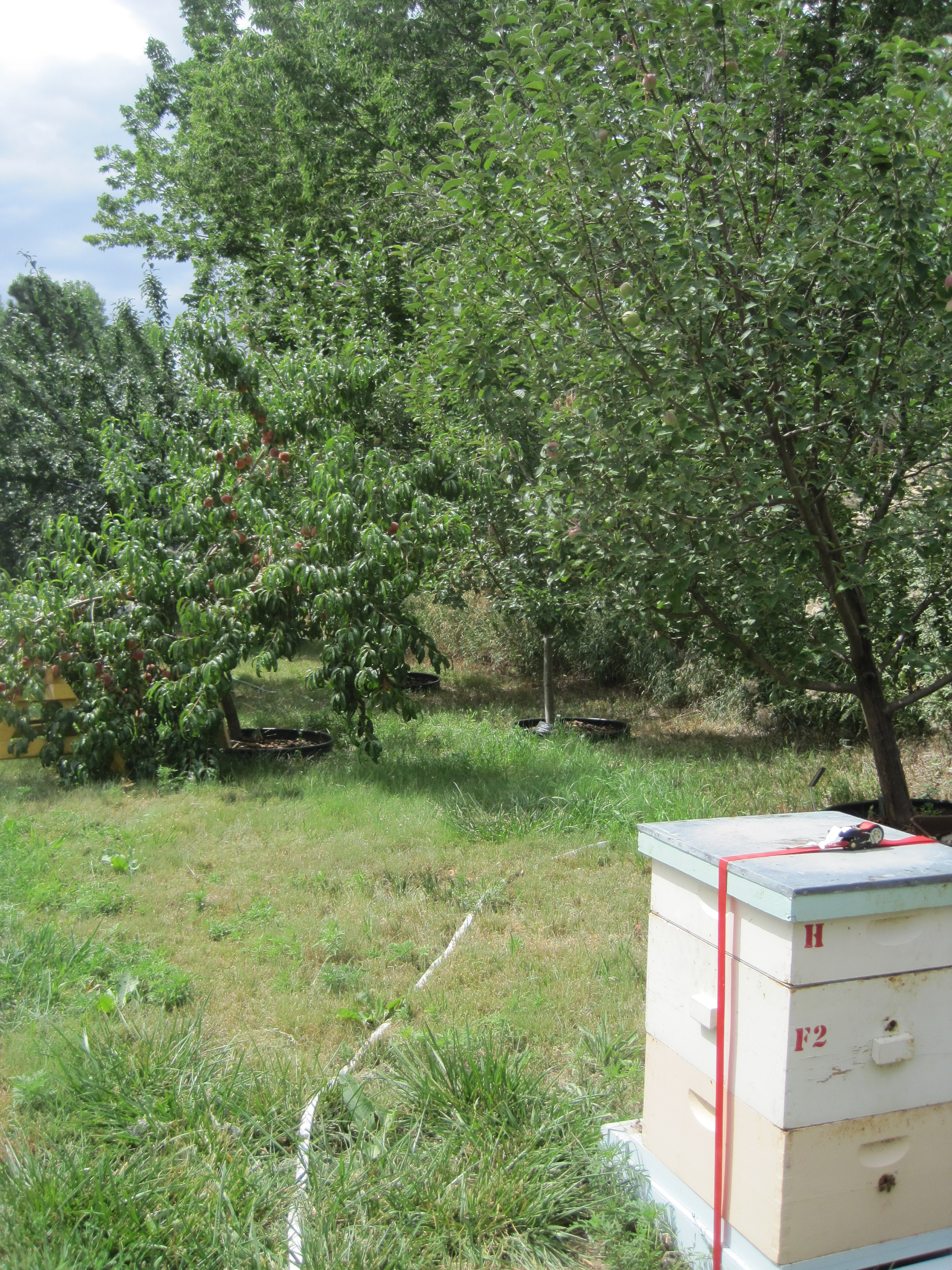 2016 beehive and orchard.jpg