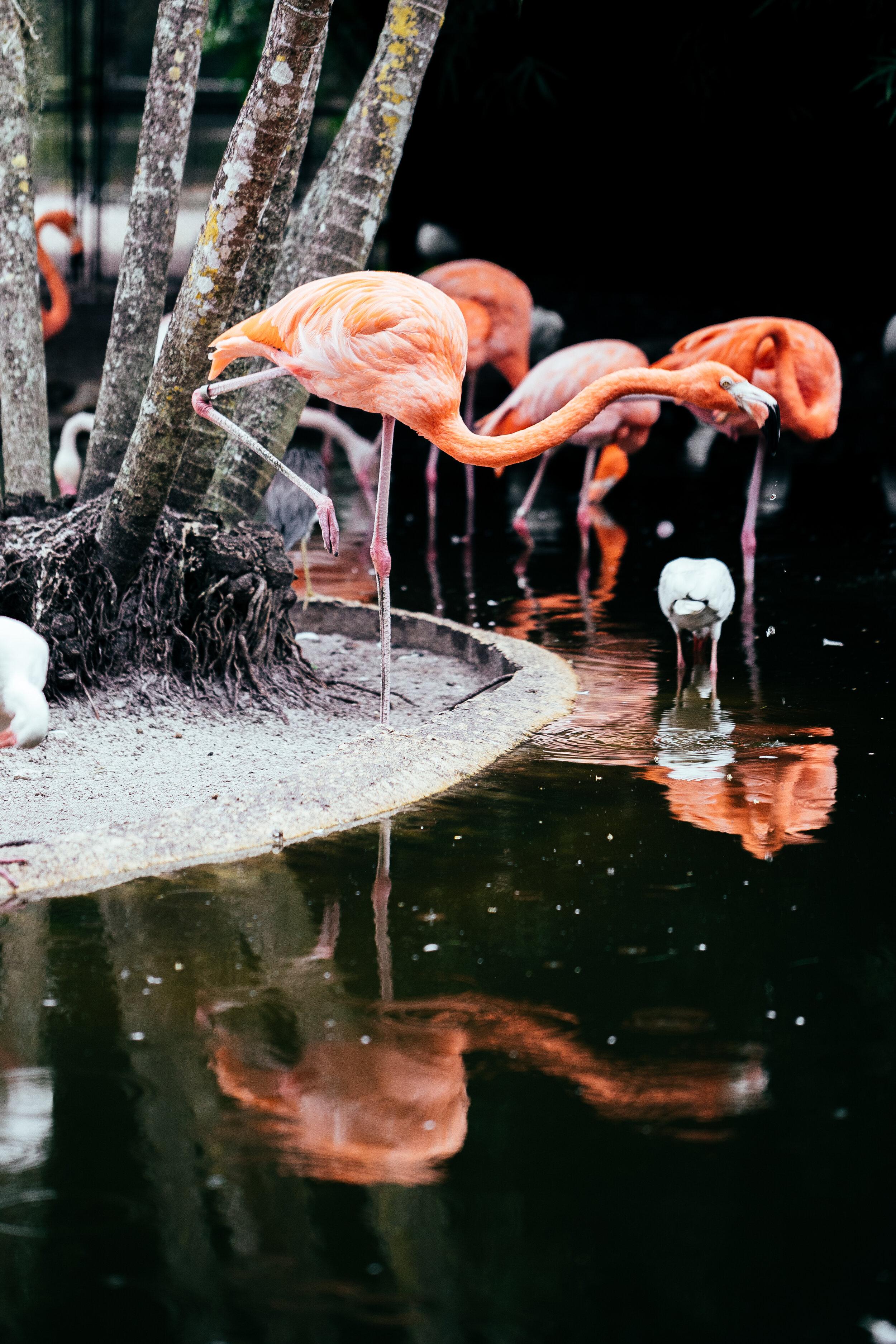 AJR_Flamingo Gardens_0032.jpg
