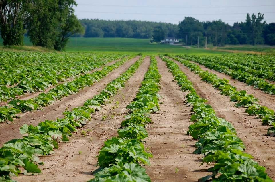 farming 2.jpg