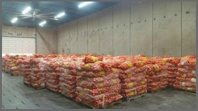 onions+drying+border.jpg