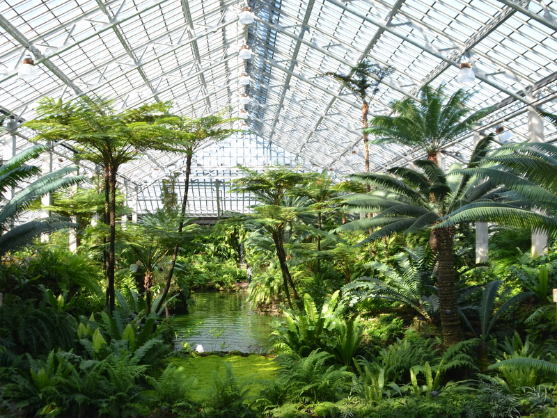 Garfield Park Conservatory_Chicago (18).JPG
