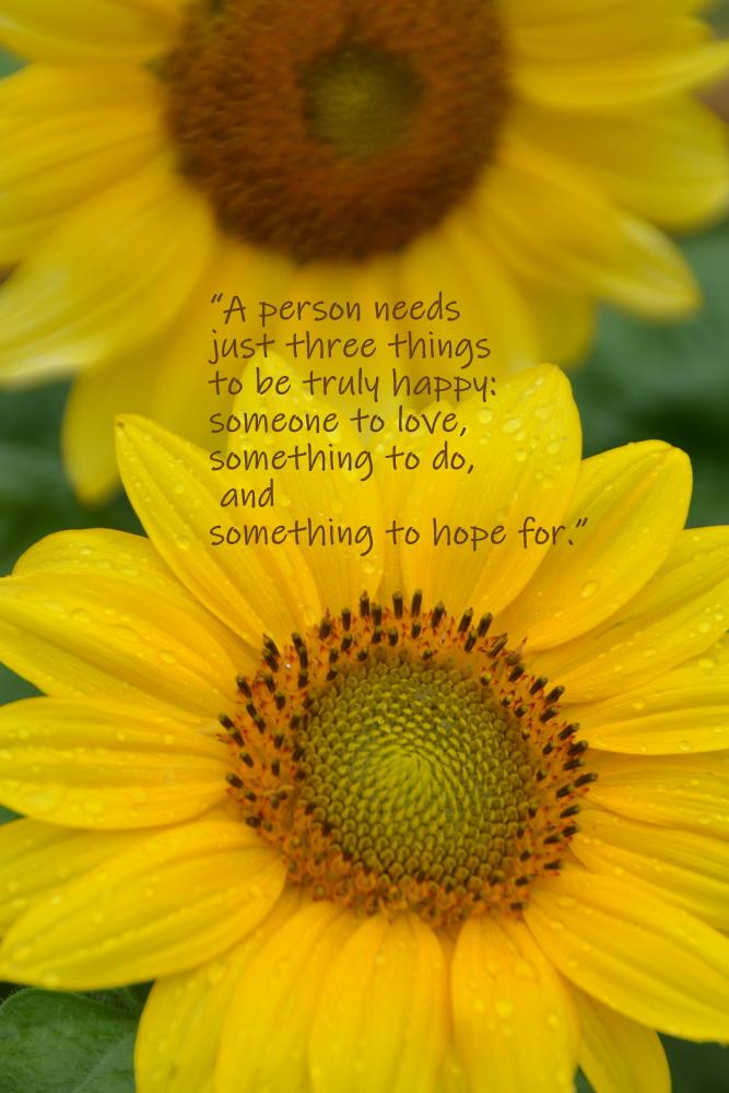 Sunflower (1).JPG