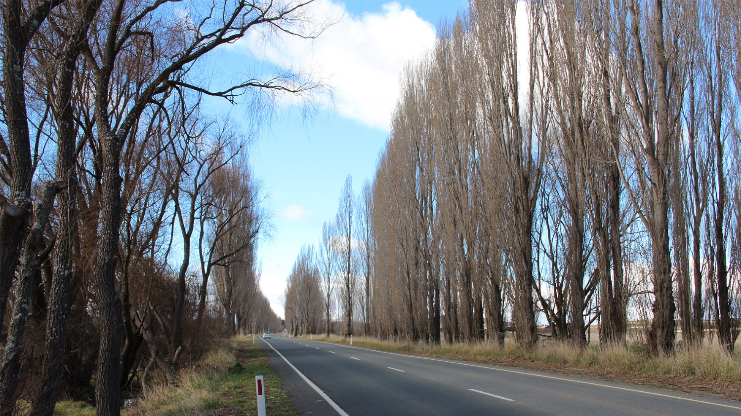 Kings Highway VIA + Tree Management Plan