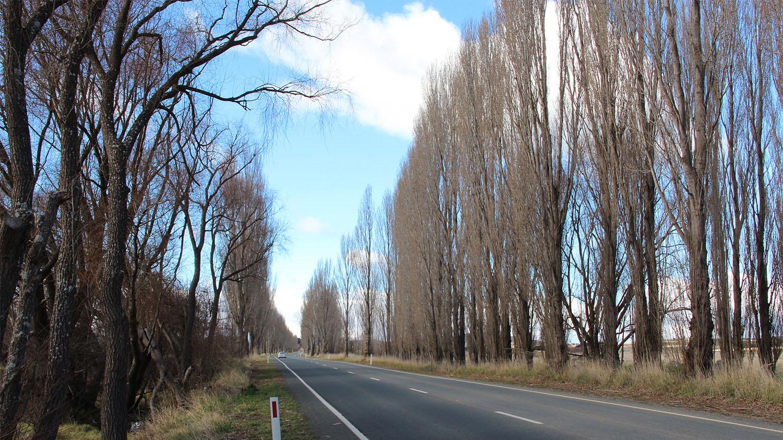 avenue-of-Lombardy-Poplars.jpg