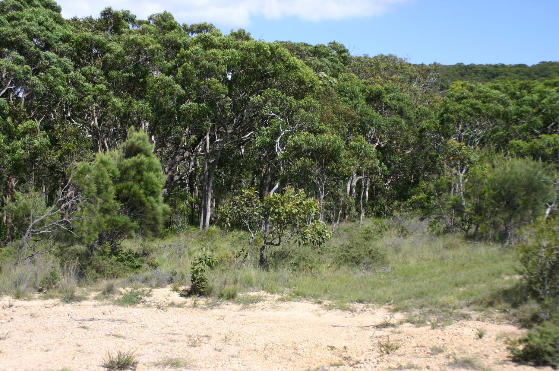 woodland vegetation.JPG