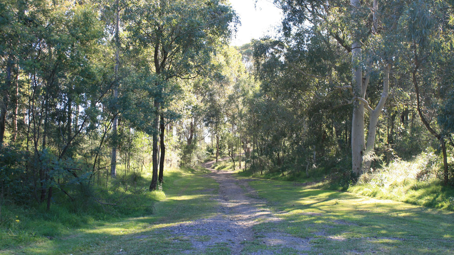 walking-track-through-bushland.jpg