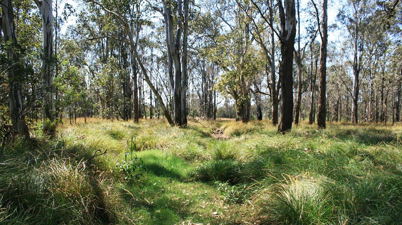 3-woodland-conservation-area.JPG