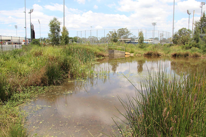 4-water quality pond.JPG