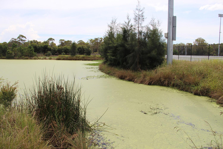 5-water quality pond 2.JPG