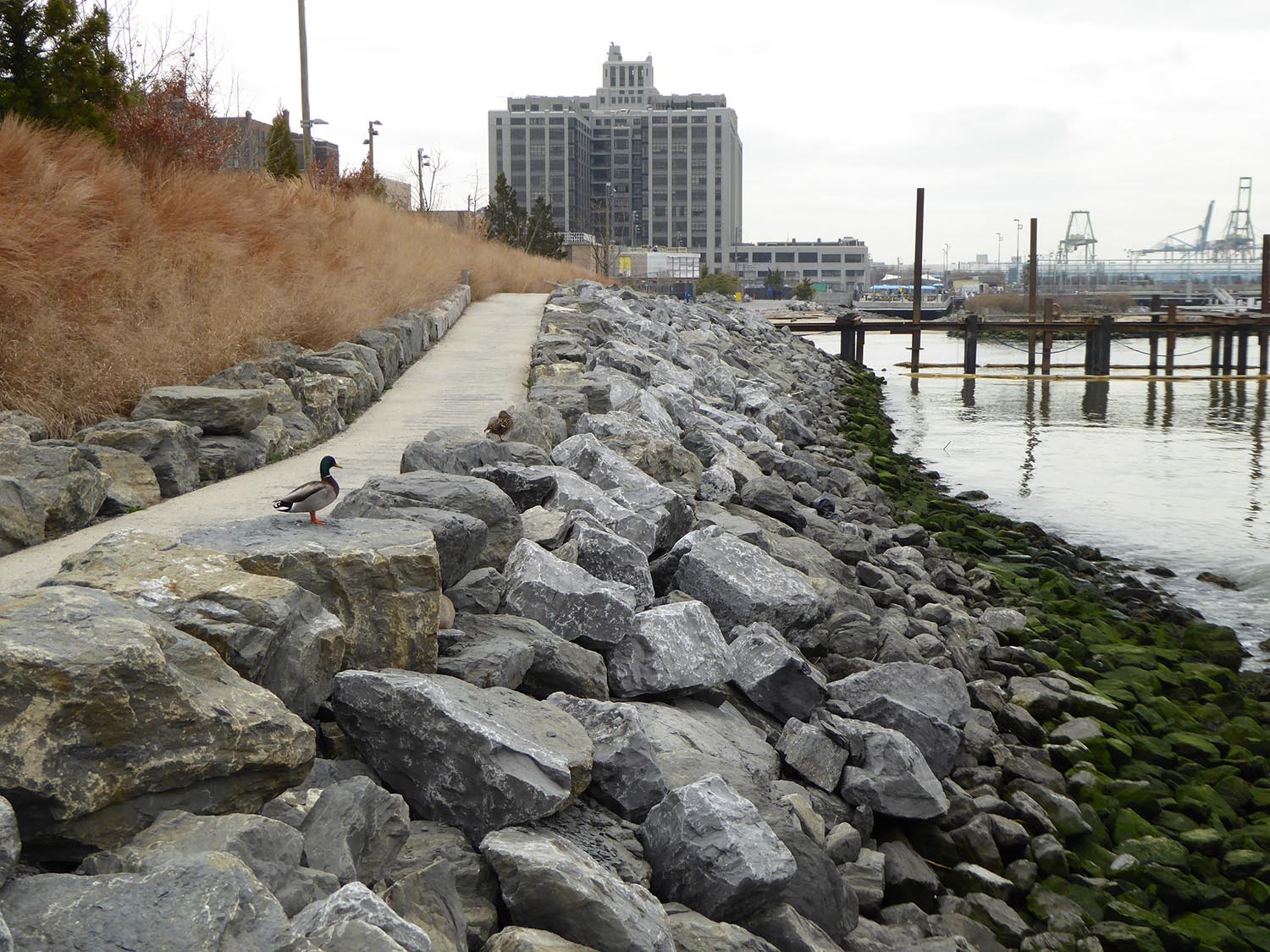 Intertidal marine habitat adjoining Pier 3