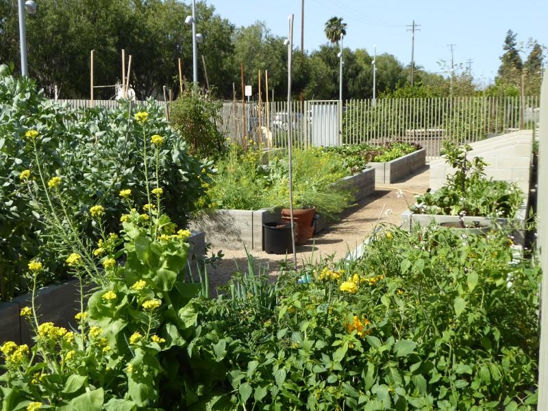 Learning garden vegetables
