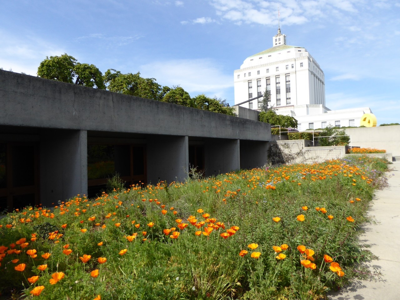 Upper terrace + California Poppies