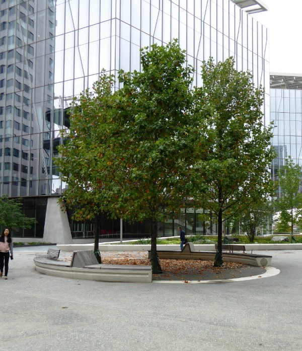 Circular sitting space with shade trees