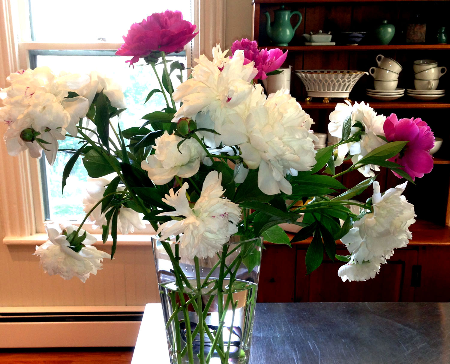 White and Pink Peonies from Garden
