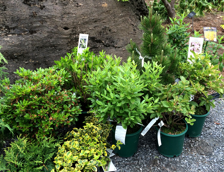 Berkshire Botanical Garden Plant Sale 2016 #5