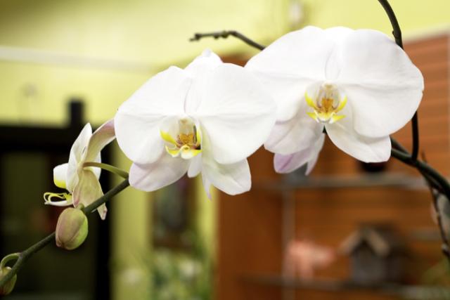 Millbrook Floral Design