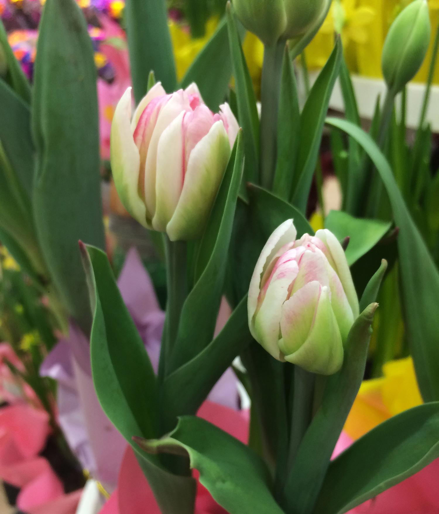tulip-nursery-Squarespace-IMG_2948.jpg
