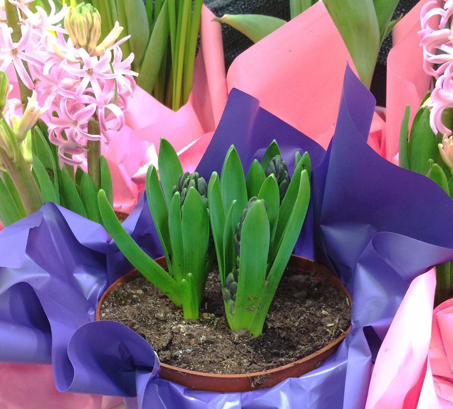 Hyacinth-Nursery-Squarespace-IMG_2929.jpg