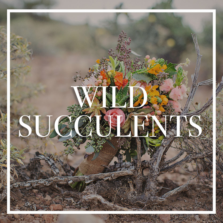 WCFD-Portfolio-COVER-wildsucculents.jpg