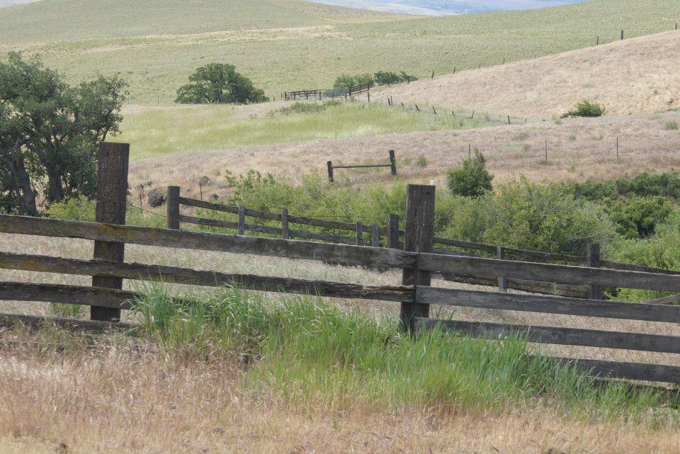 Utilitarian-Farm-Buildings_3.jpg