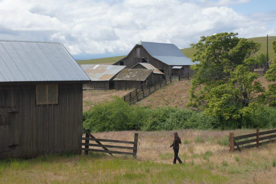 Utilitarian-Farm-Buildings_9.jpg