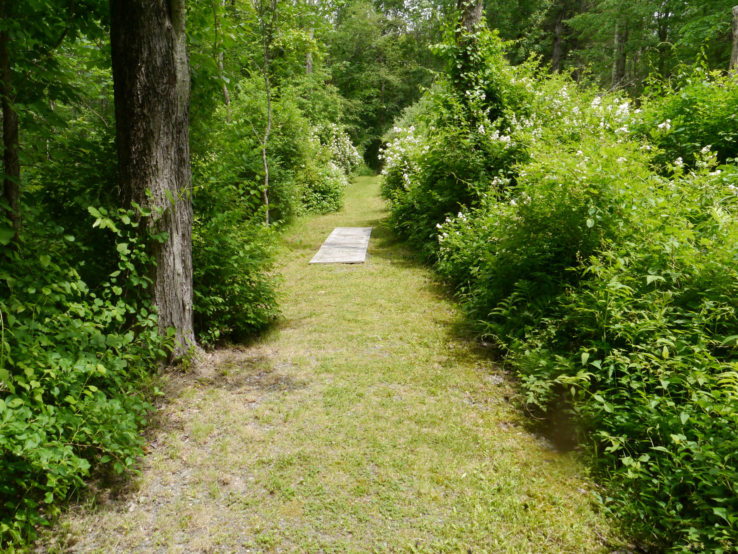 Beautiful path into the woods. Kareth Whitchurch took this photo on retreat June 2018.