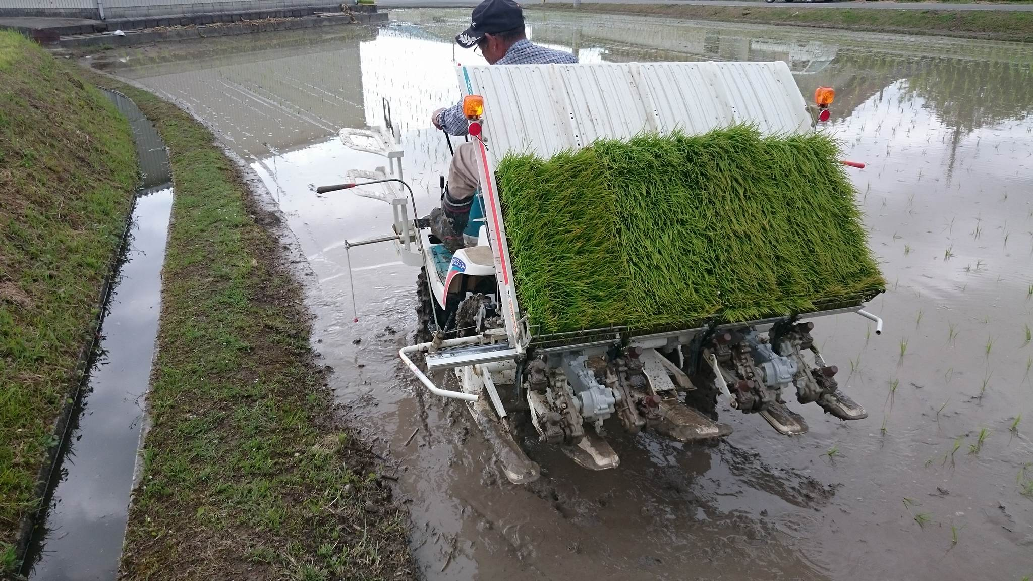 This is the back end of the rice planting mechanism. You load the rice seedlings from the top.