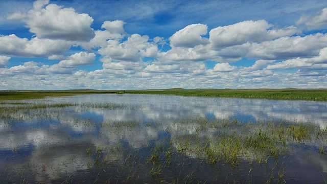 Puffy clouds in a blue, blue sky mirrored in a Montana wetland.