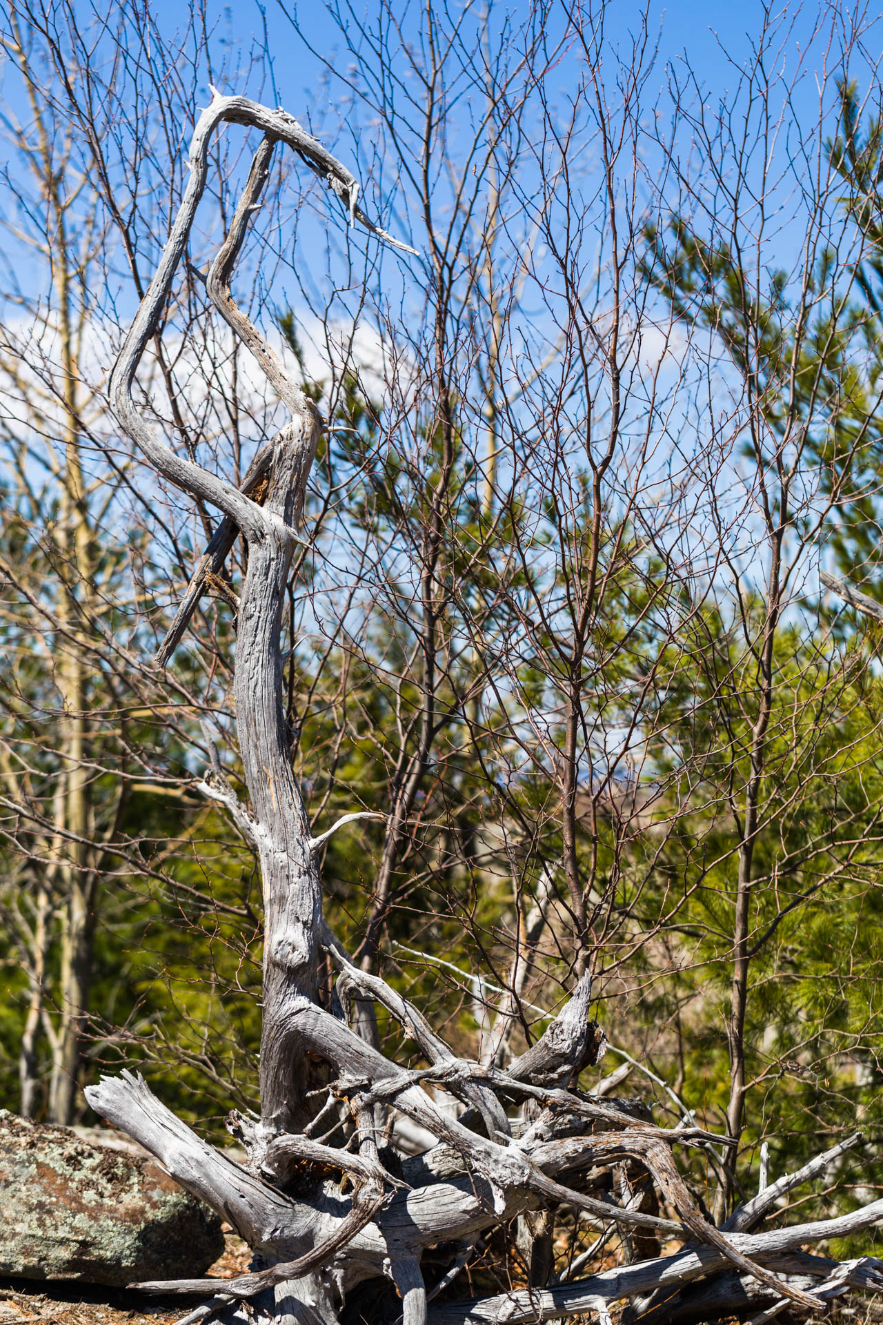 harriman_hike_april-5.jpg
