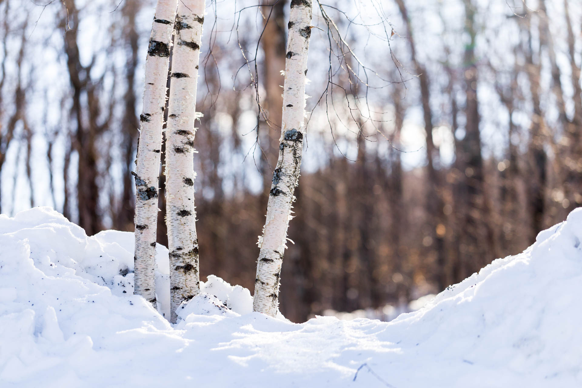 I didn't take many photos this time around, but I really loved this trio of birch trees and the light was just right. The background is too distracting for it to be a great image, though.