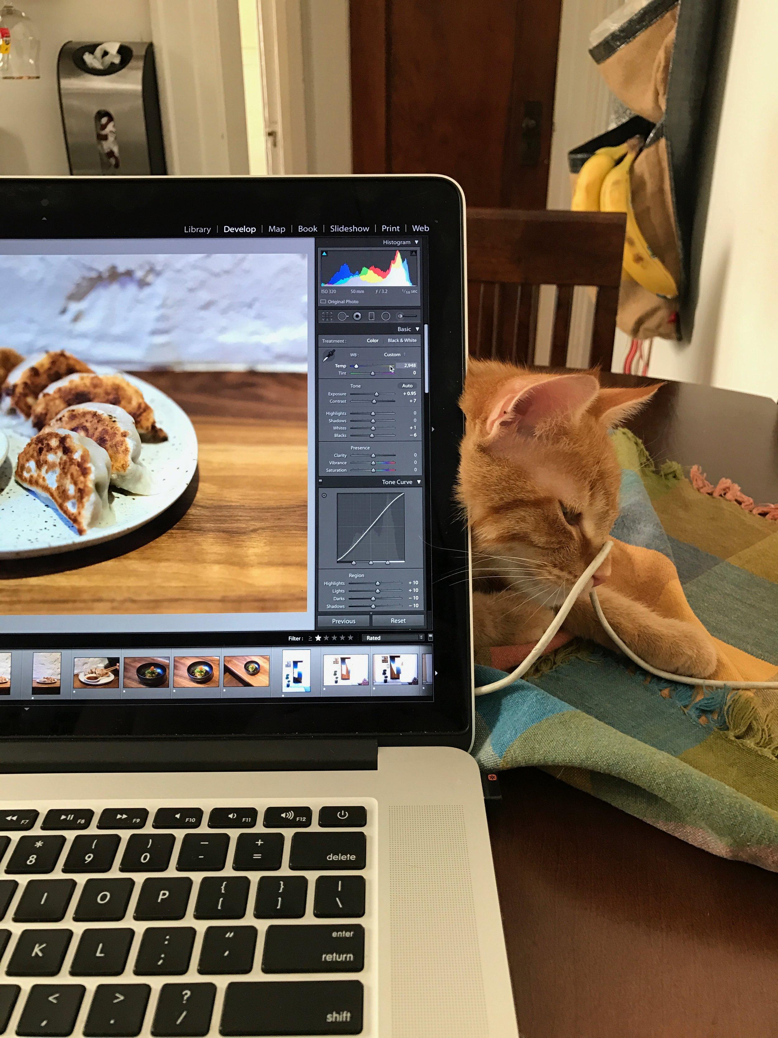 Autumn is the ever faithful laptop editing helper.