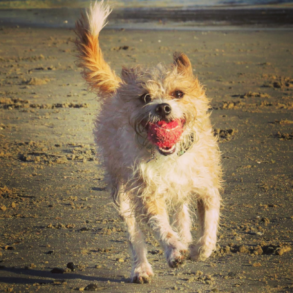 Yep, that's me... Benny! Without a doubt, paws down, my #1 favorite thing about life? Small tennis balls.