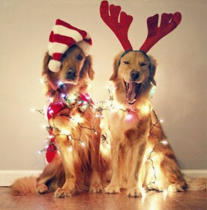 Sama-Dog-Holiday-Dogs